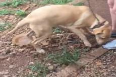 Animal está sob a responsabilidade da ONG Faunamiga