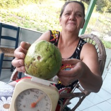 Fruta pesou quase 1 kg